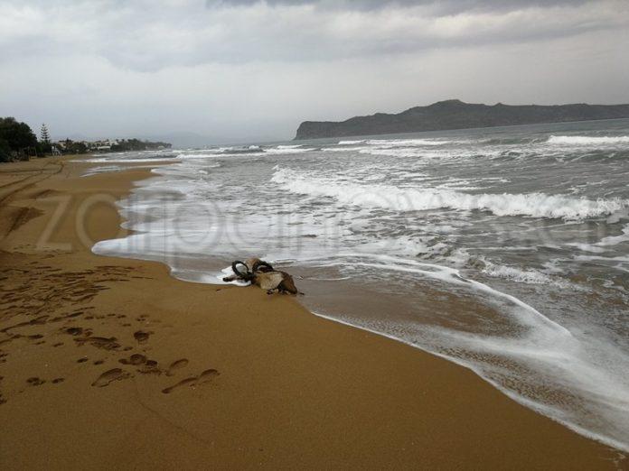 Χανιά: Οι εικόνες στην αμμουδιά πάγωσαν μικρούς και μεγάλους – Πήγαν κοντά και διαπίστωσαν τι είχε συμβεί [pics]