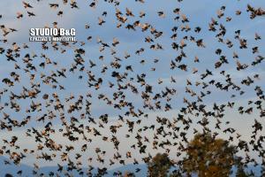Αργολίδα: Τα πουλιά γέμισαν τον ουρανό – Χιλιάδες ψαρόνια μαγνήτισαν τα βλέμματα μικρών και μεγάλων!