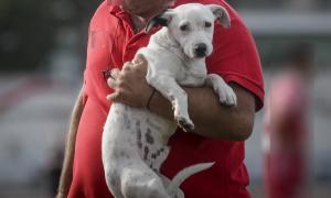 Κρήτη: Με χειροπέδες δύο ιδιοκτήτες σκύλων που δεν είχαν τσιπάκι