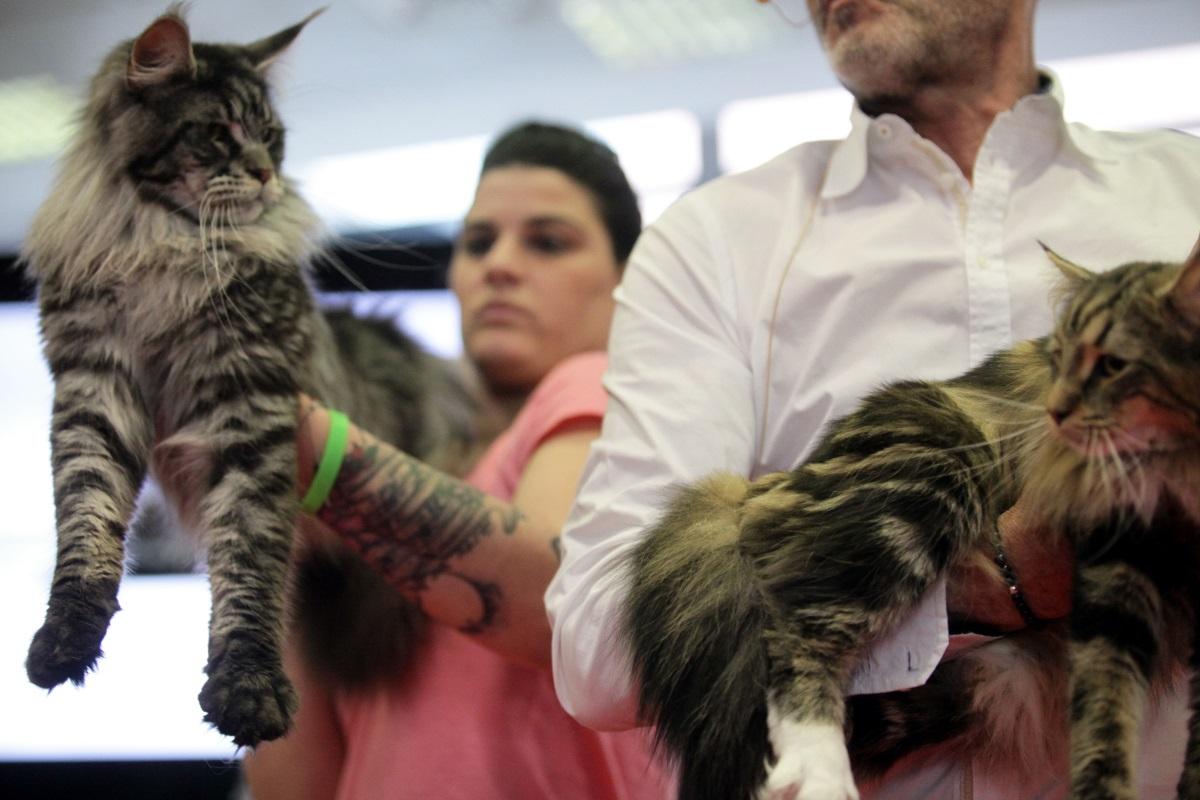 Τέρμα οι αλλεργίες από τις γάτες!