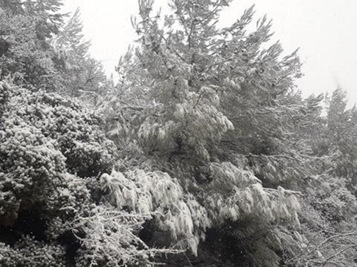 """Καιρός: """"Νυφούλα"""" στα λευκά η Λέσβος! Χιόνι σε πολλές περιοχές του νησιού- Video"""