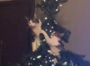 Δυο γάτες αποφάσισαν να λύσουν τις… διαφορές τους πάνω στο Χριστουγεννιάτικο δέντρο! – video