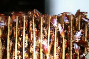 Ταΐζουν εκατομμύρια κατσαρίδες με τα σκουπίδια τους! video, pics