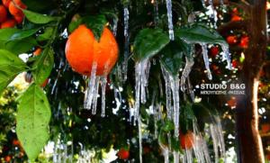 Άργος: Σταλακτίτες κάτω από τις πορτοκαλιές! Οι εικόνες που μαγνητίζουν