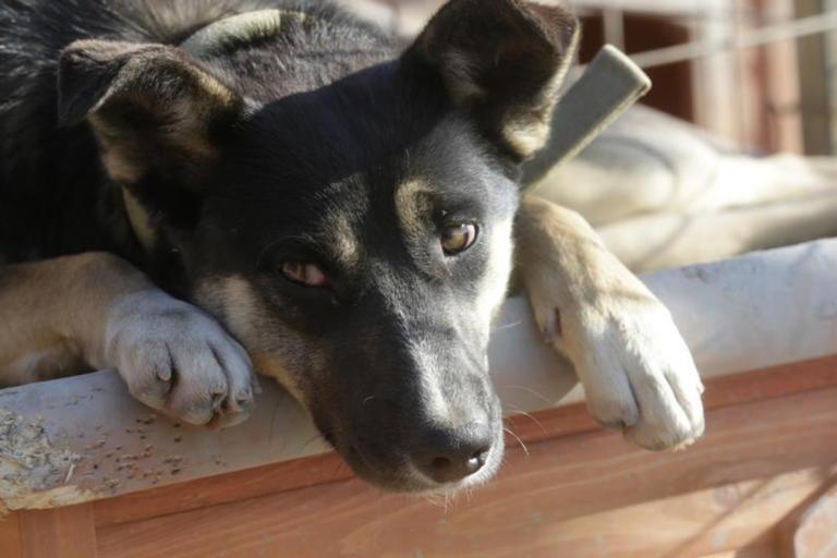 Γυναίκα κινδυνεύει με φυλάκιση επειδή… τάιζε αδέσποτα σκυλιλα!