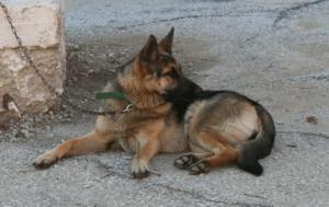 Χανιά: Αδέσποτος σκύλος χίμηξε σε γυναίκα που περπατούσε – Η εικόνα μετά την επίθεση [pics]