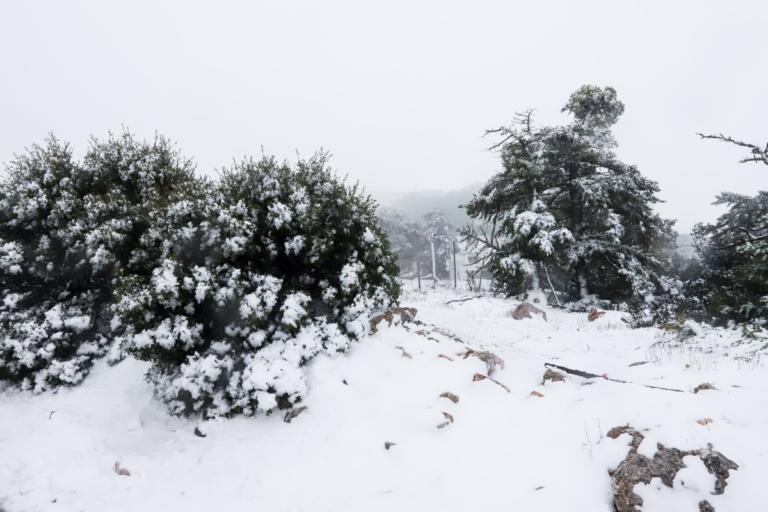 Καιρός Πρωτοχρονιάς: Χιόνια, κρύο και βροχές!