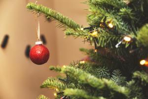 Μέχρι και 25.000 ζωύφια έχει κάθε χριστουγεννιάτικο δέντρο που βάζουμε σπίτι! Τι πρέπει να ξέρετε