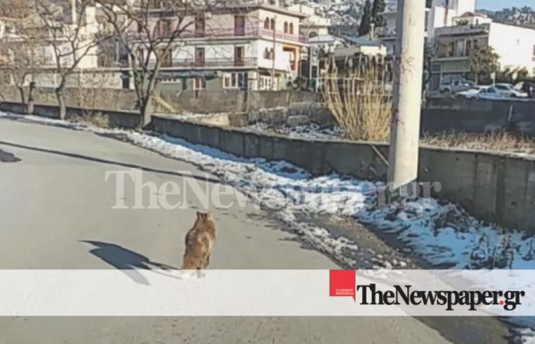 Αλεπουδίτσα έκανε βόλτες στο Βόλο [pics] | Newsit.gr