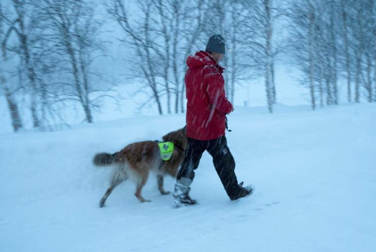 Νορβηγία: Αγνοούνται τέσσερις τουρίστες, μετά από χιονοστιβάδα | Newsit.gr