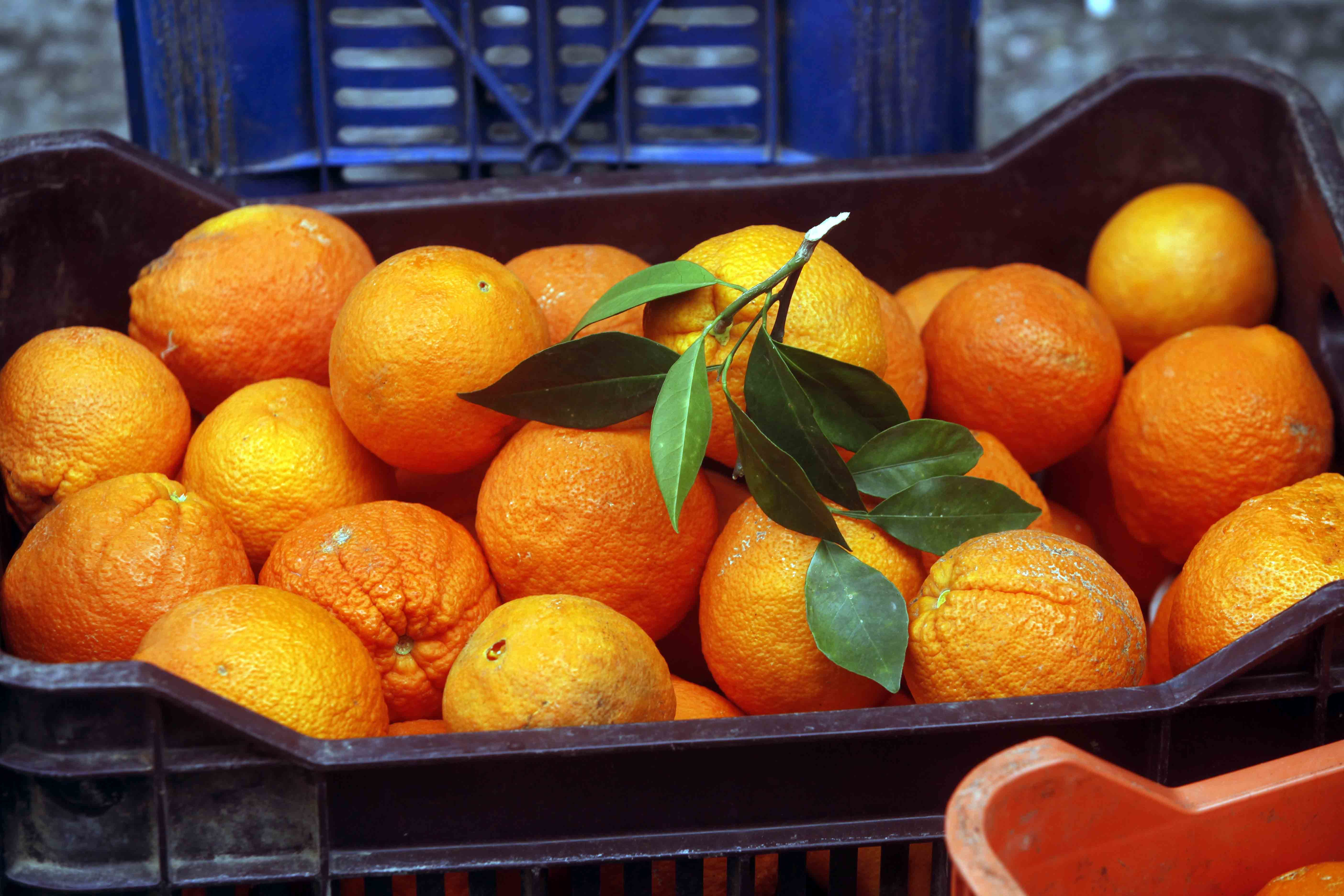 Δεσμεύτηκαν 1,6 τόνοι φρούτων στον Πειραιά