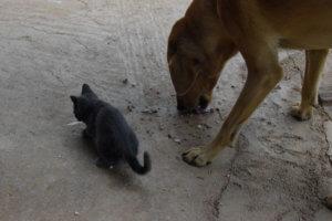 Ηράκλειο: Σκότωνε σκυλιά και τα έκρυβε στην αποθήκη του σπιτιού της – Σάλος στο Αρκαλοχώρι!