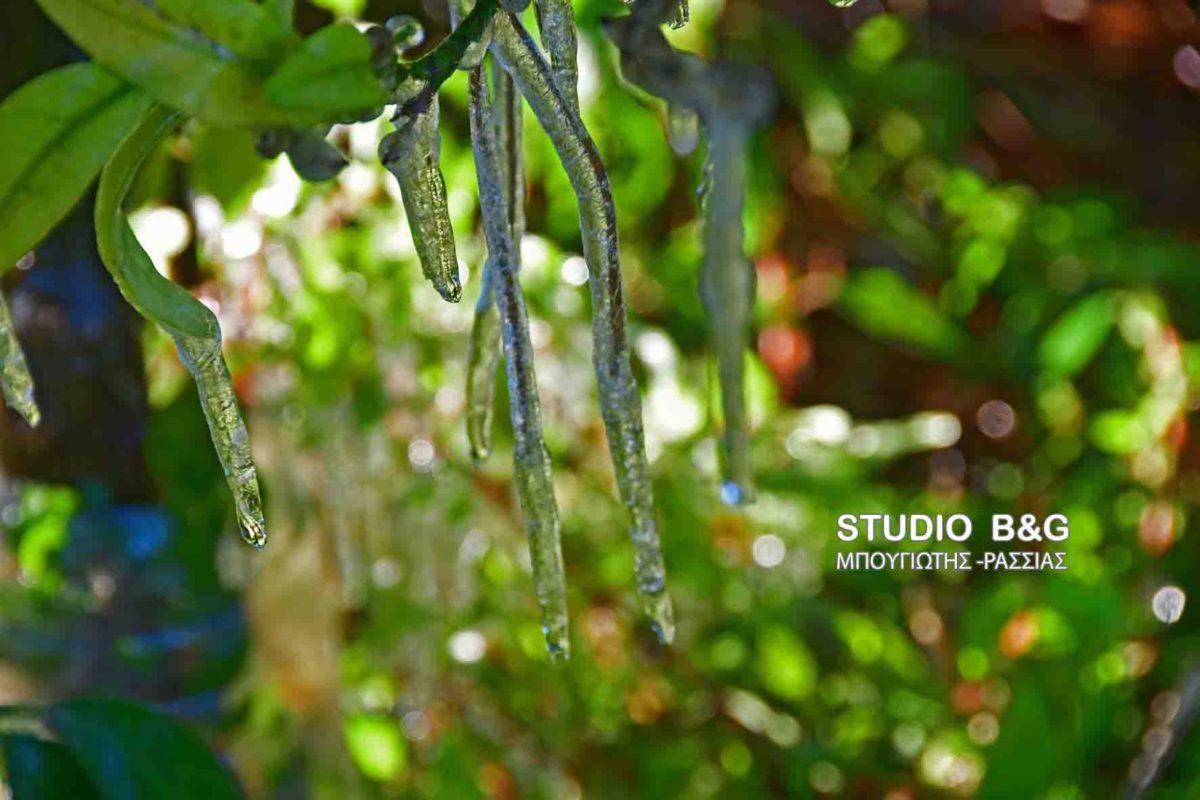 Στην «κατάψυξη» και η Αργολίδα – Σταλακτίτες… πάγου στα δέντρα [pics]