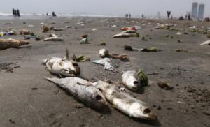 Οικολογική καταστροφή! Χιλιάδες ψάρια νεκρά από τον καύσωνα στην Αυστραλία
