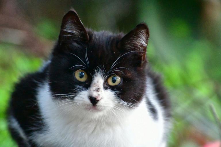 Γάτα κατέστρεψε σπάνιο πίνακα ζωγραφικής! – Video | Newsit.gr