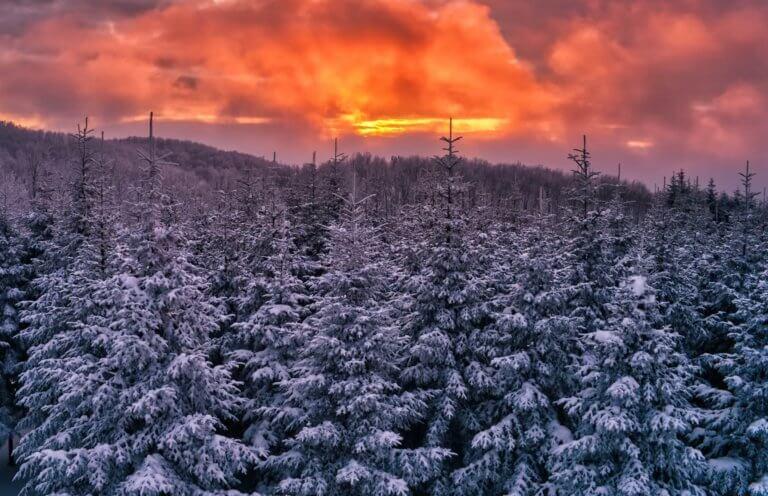 """Καιρός – Φοίβος: Έτσι θα """"χτυπήσει"""" με χιόνια, καταιγίδες, παγετό!"""