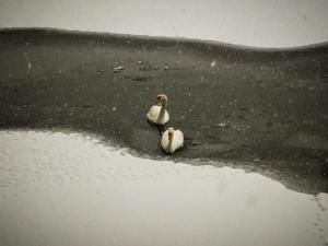 Καιρός: Οι πάπιες κάνουν πατινάζ στην παγωμένη λίμνη της Καστοριάς – Μοναδικές εικόνες [pics]