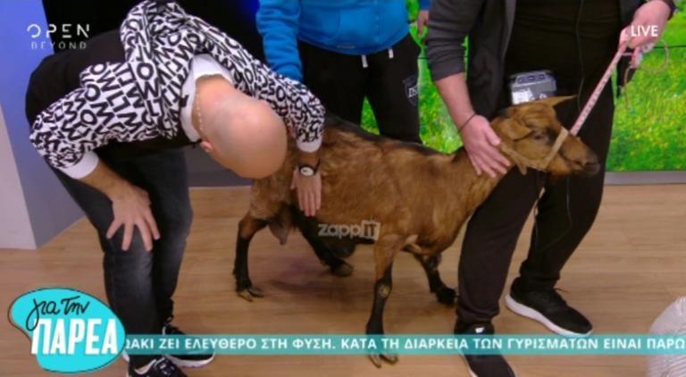 Δεν έχει προηγούμενο! Μπήκε κατσίκα στο πλατό του Μουτσινά! | Newsit.gr