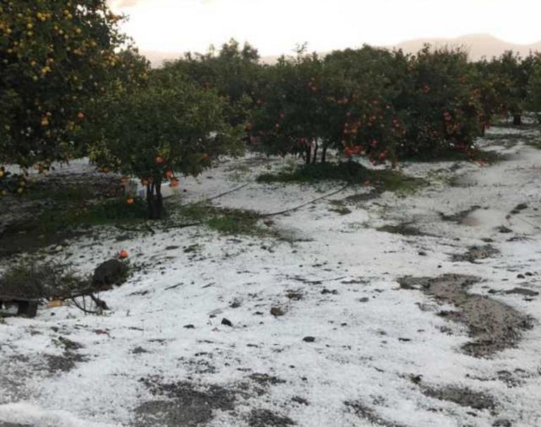 Λακωνία: Χαλάζι ισοπέδωσε τις καλλιέργειες [pics] | Newsit.gr