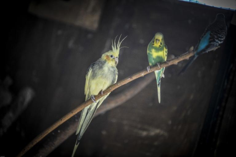 Για τις παπαγαλίνες… δεν μετράει το μέγεθος! | Newsit.gr