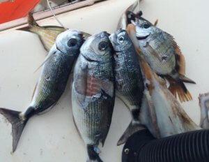 """Μακρόνησος: Η ψαριά του Παύλου Πολάκη – Η ατάκα για """"ανώνυμα φασισταριά"""" μετά το ψαροντούφεκο [pics]"""