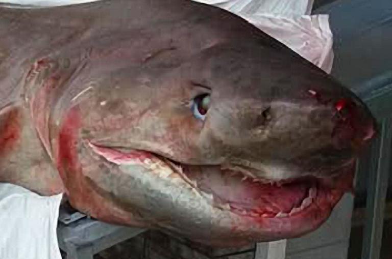 Ναύπλιο: Αυτό είναι το σκυλόψαρο που γέμισε τη βιτρίνα ιχθυοπωλείου – Η ζυγαριά έλυσε την απορία όλων [pics]