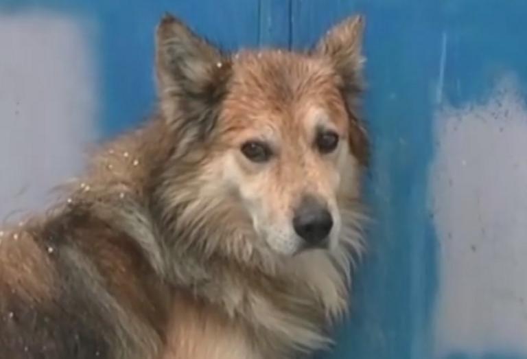 Σκιάθος: Σκότωσε σκύλο με αεροβόλο στα καλά καθούμενα – Η εικόνα που προκαλεί οργή και βάζει σε σκέψεις
