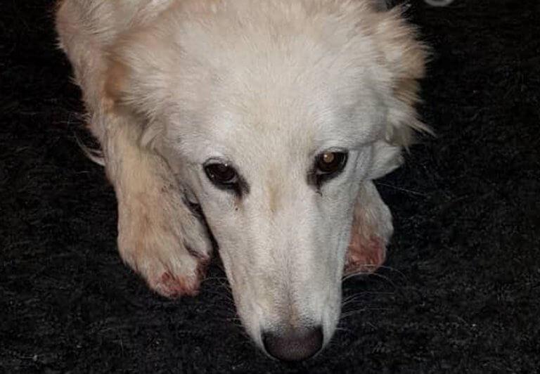 Χανιά: Σοκάρουν οι καμένες πατούσες του θλιμμένου σκύλου – Οι σκηνές που προηγήθηκαν στην εθνική οδό [pics]