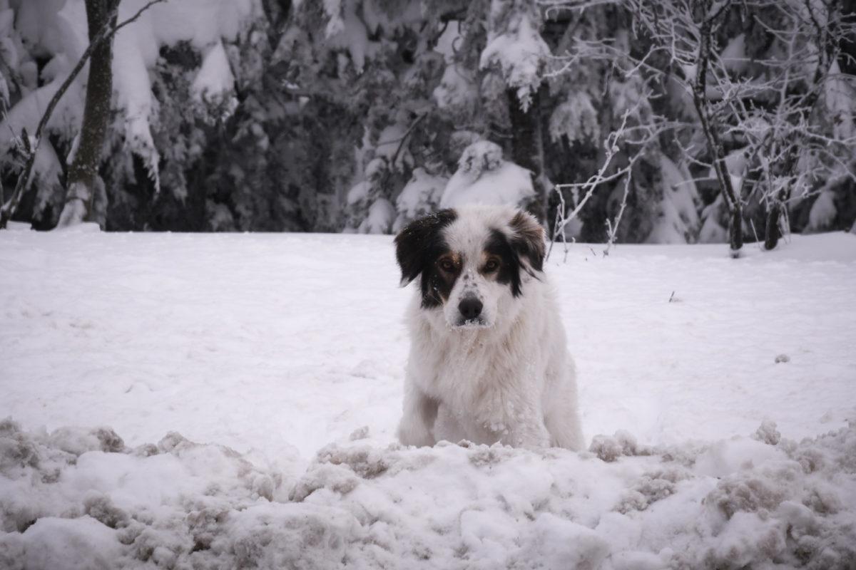Ο σκύλος… χάθηκε στο χιόνι | Newsit.gr