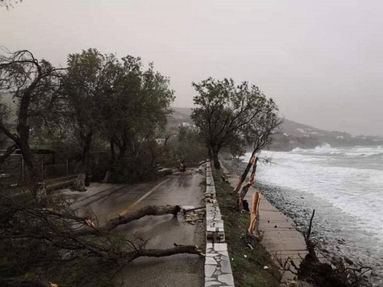 Θεομηνία στην Τήνο! Ξεριζώθηκαν δέντρα – Έκλεισε ο δρόμος [pics]