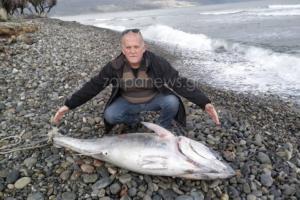 Χανιά: Η θάλασσα ξέβρασε αυτό το τεράστιο ψάρι – Μικροί και μεγάλοι προσπαθούσαν να πιστέψουν στα μάτια τους [pics]