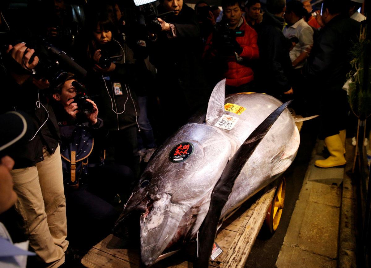 Ένα ψάρι αξίας… 2,7 εκατομμυρίων ευρώ!