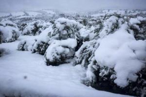 Επιχείρηση διάσωσης βοσκού στη χιονισμένη Φθιώτιδα
