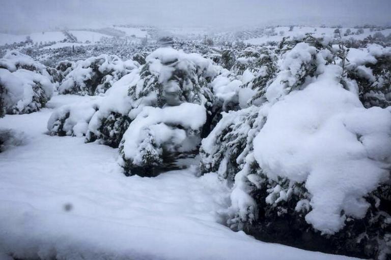 Επιχείρηση διάσωσης βοσκού στη χιονισμένη Φθιώτιδα   Newsit.gr