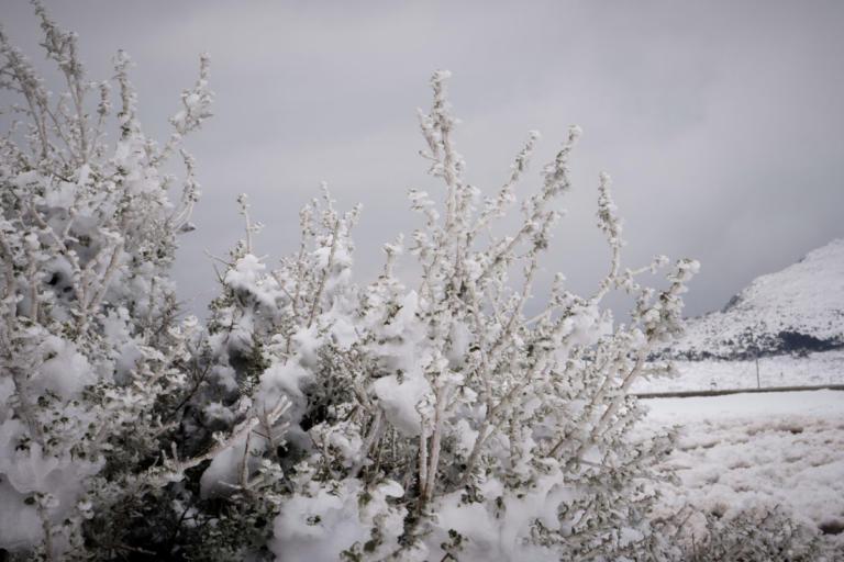 Καιρός: Διακοπές κυκλοφορίας στα Καλάβρυτα και στην ορεινή Ναυπακτία | Newsit.gr