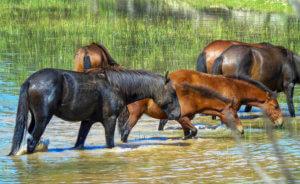 Άγνωστος σκοτώνει άλογα στο Καρβουνάρι Θεσπρωτίας