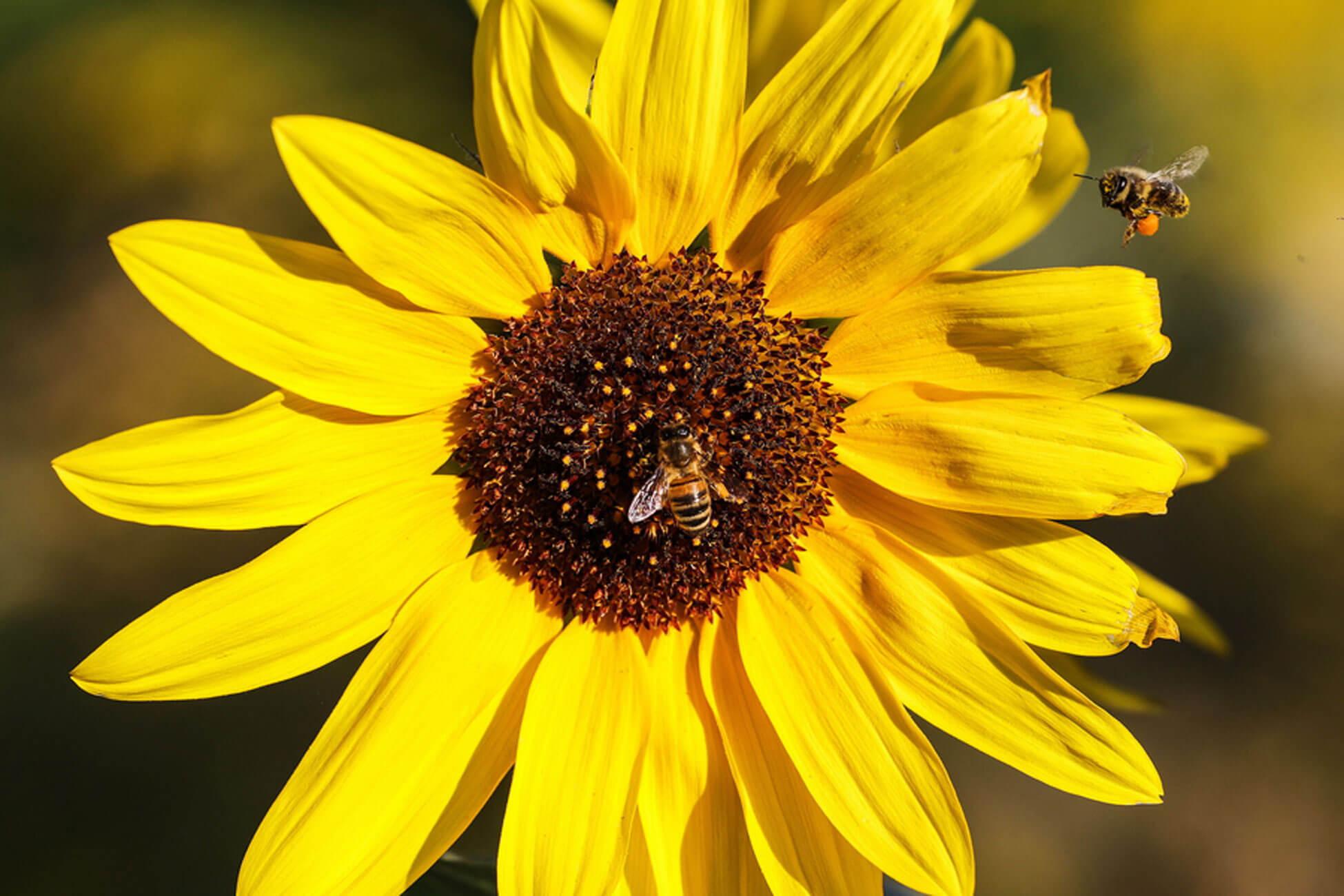 Οι μέλισσες… ξέρουν μαθηματικά – Μπορούν να κάνουν πρόσθεση και αφαίρεση