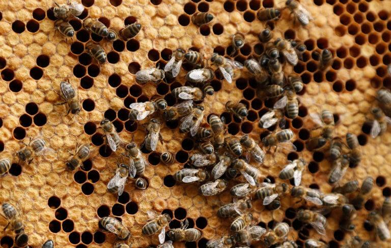 Σε κρίσιμη κατάσταση ένας 70χρονος που δέχτηκε επίθεση από χιλιάδες μέλισσες