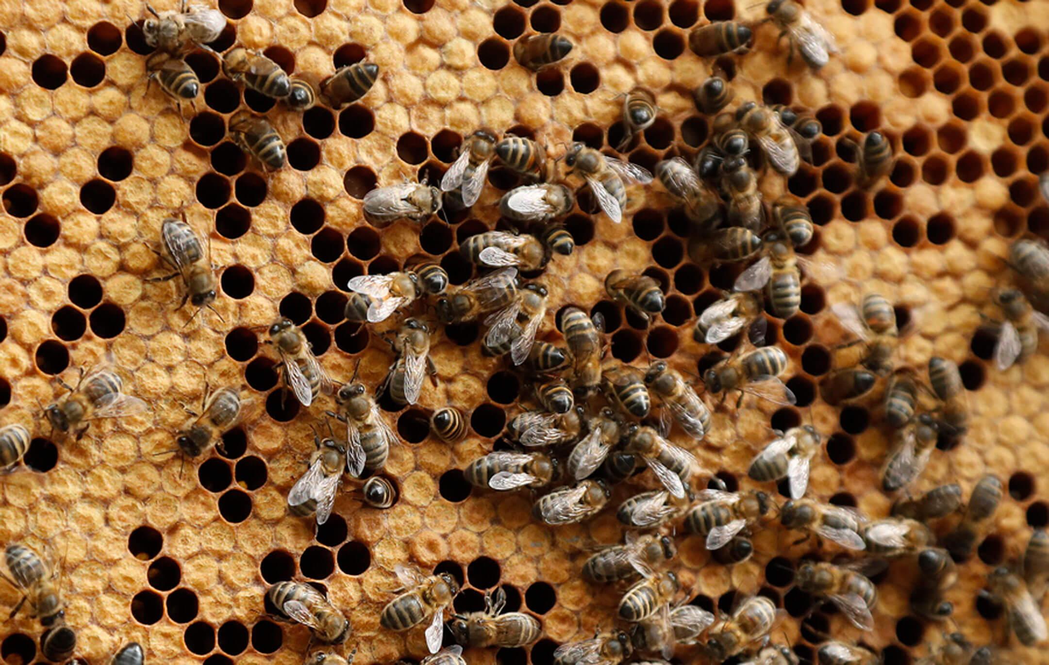 Μάχη για τη ζωή του δίνει 70χρονος στη Γαλλία που δέχτηκε επίθεση από χιλιάδες μέλισσες