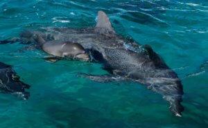 Μήνυση για τη σφαγή δελφινιών στην Ιαπωνία