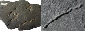 Συγκλονιστικές αποκαλύψεις! Η ζωή στην Γη πριν 2,1 δισεκατομμύρια χρόνια!