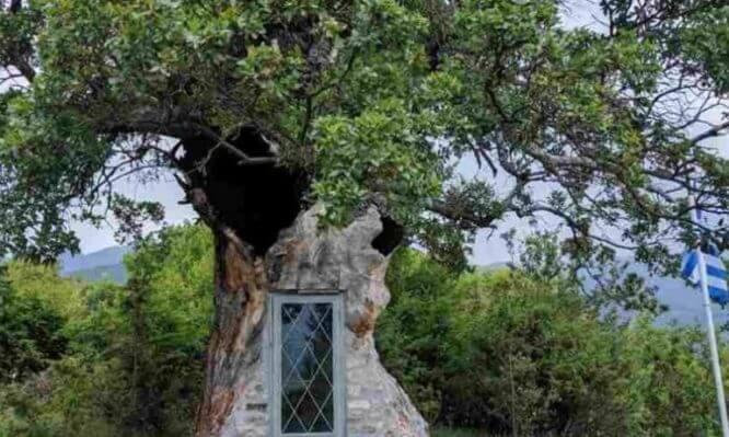 Εκκλησάκι του Αγίου Παΐσιου χτισμένο σε δέντρο 300 ετών!