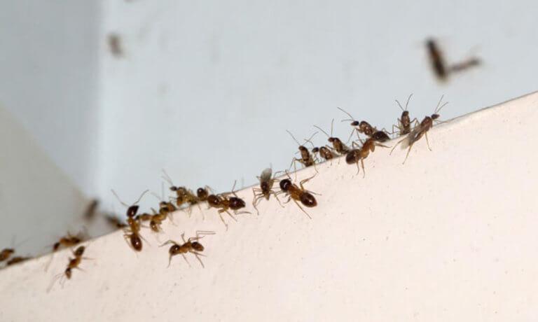 """""""Καμπανάκι"""" από τους επιστήμονες – Εξαφανίζονται τα έντομα από τον κόσμο!"""