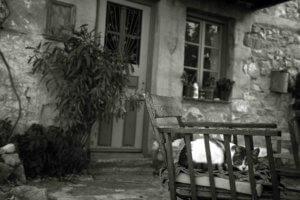 Εύβοια: Ανατριχιαστικές εικόνες δίπλα σε νεκρή γυναίκα – Σενάριο φρίκης μετά την αυτοψία αστυνομικών!