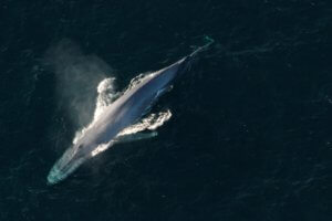 Κλιματική Αλλαγή: Οι ωκεανοί της Γης θα αλλάξουν χρώμα έως το τέλος του αιώνα