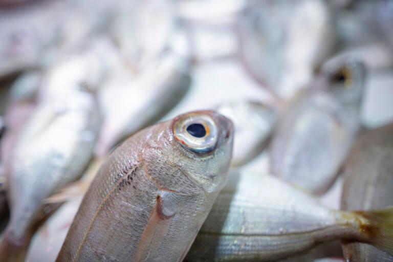 Δυο τόνοι ληγμένα ψάρια στον Πειραιά