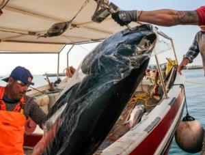 Νάξος: Η ψαριά ζύγιζε πάνω από 300 κιλά – Χρειάστηκε γερανός για να τα βγάλουν από το αλιευτικό [pics, video]