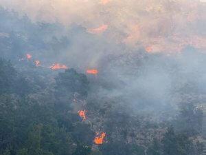 Ιεράπετρα: Έβαλαν φωτιά για να κάψουν κλαδιά και προκάλεσαν μεγάλη πυρκαγιά – Ολονύχτια μάχη πυροσβεστών [pics]