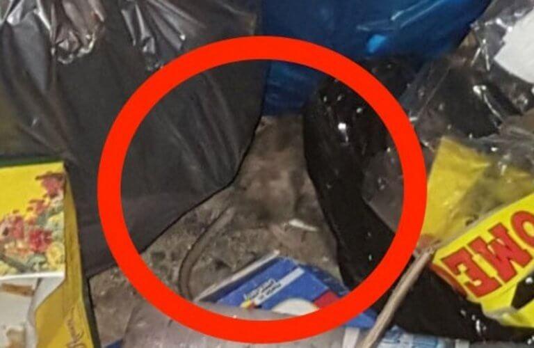 Ηράκλειο: Τα ποντίκια κάνουν πάρτι – Βουνά από σκουπίδια σε δρόμους και πεζοδρόμια [pics]