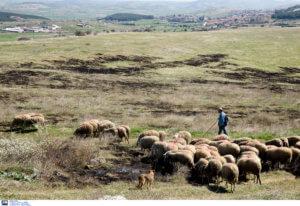 Ηράκλειο: Μηνύσεις και συλλήψεις μετά από άγριο ξύλο σε χωράφι